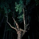 Illuminated tree  by Cfbphotography