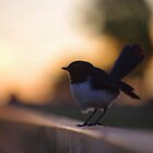 Wagtail sunset by Penny Kittel