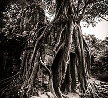Tree grows out of the ruin of Ta Som, Angkor by hangingpixels