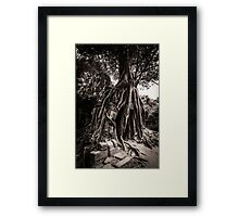 Tree grows out of the ruin of Ta Som, Angkor Framed Print