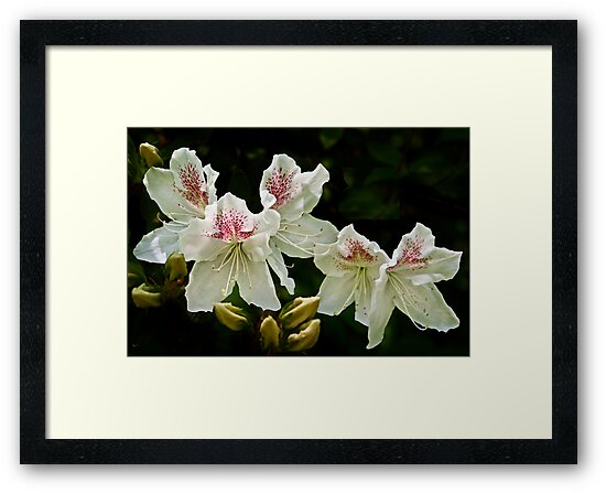 2013 Calendar - Light and Bloom - March by cclaude