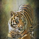 Crouching Tiger..... by polly470