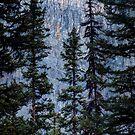 Pines at Lake Lousie, Banff, Alberta Canada by Dawne Olson