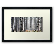 misty woodland Framed Print