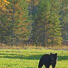 Bear in Nolalu by Dawne Olson