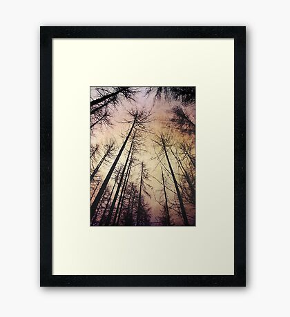 Beautiful purple coloured forest Framed Print