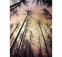 Beautiful purple coloured forest Photographic Print