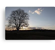 A Plain Tree and the Last of the Sun Canvas Print