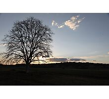 A Plain Tree and the Last of the Sun Photographic Print