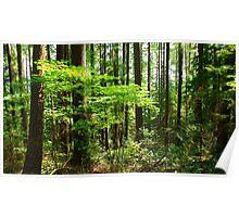 Rainforest Scene Poster