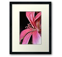 Unknown Flower Framed Print