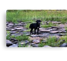Cute Youngster, Sammy Canvas Print