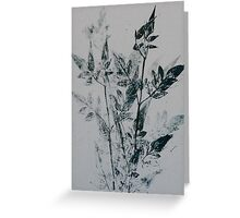 Leaf Collection 2 Greeting Card