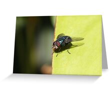 Fly on Leaf Greeting Card
