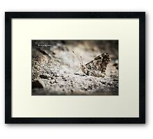 Last stop on the rock Framed Print