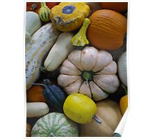 Squashes and Pumpkins Poster