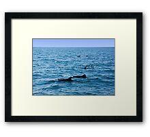 Ocean full of dolphins Framed Print