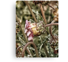flower with candy stripes Canvas Print