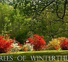 Trees of Winterthur by cclaude