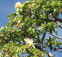 Boab Tree In Flower by Finkie