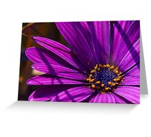 Purple African Daisy Close Up Greeting Card