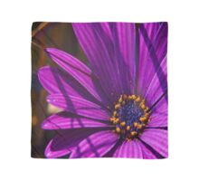 Purple African Daisy Close Up Scarf