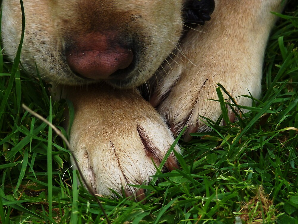 Paws for Thought. by Meg Hart