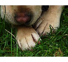 Paws for Thought. Photographic Print