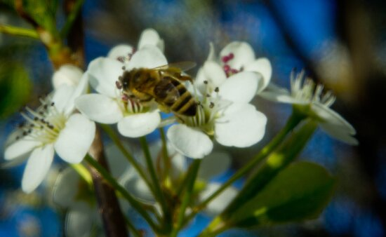 The Busy Bee Photo 3 by Sherene Clow