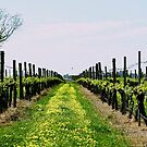 Grapevines and Dandelions by Debbie-anne