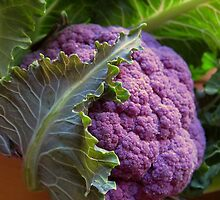 Purple Cauliflower by Kathy Reid