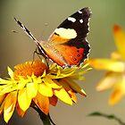 Butterfly magic by Jillian Holmes