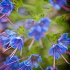 Flowerscapes - Dreamy Blue by lesslinear