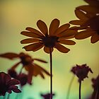 Flowerscapes - Evening Sun by lesslinear
