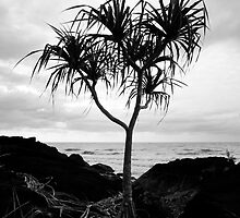 Pandanas on the Beach by May-Le Ng