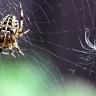 Spider in web . by vonniepyn