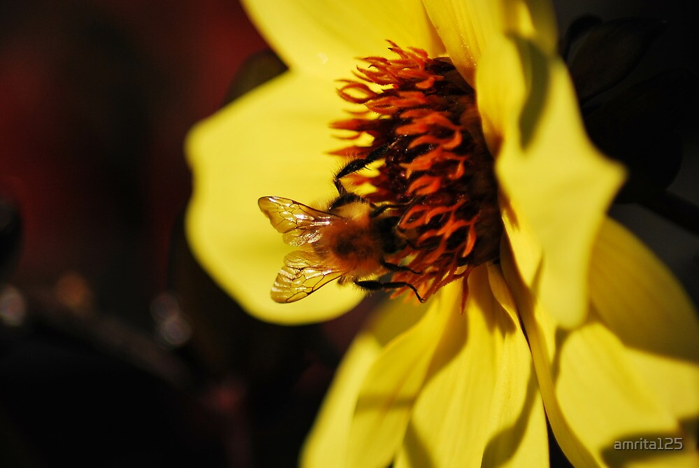 Honey bee at work by amrita125