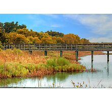 Pier Through The Wetlands Photographic Print