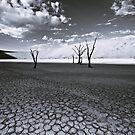 The Barren Land of Dead Vlei by Jill Fisher