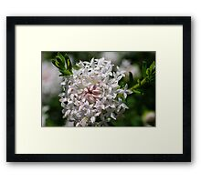 wild flower season again #1 Framed Print