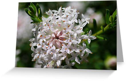 wild flower season again #1 by BigAndRed
