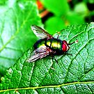 The greenest Fly i have ever seen! by Wonkstar