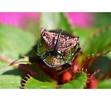 Rainbow Scarab Beetle I Photographic Print