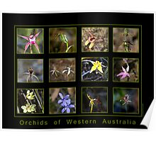 Orchids of Western Australia Poster