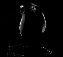 Black With A Hint Of Primate Silhouette by artisandelimage