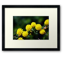 wild flower season again 2 Framed Print