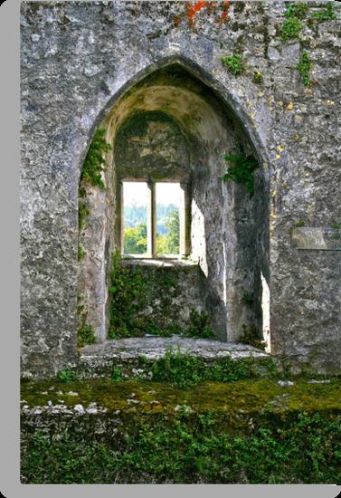 Foliage on Blarney Castle Window, County Cork, Ireland by Mary Fox
