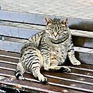 Irish Fat Cat, County Cork, Ireland by Mary Fox