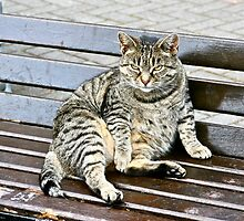 Irish Fat Cat, County Cork, Ireland by Mary Fox