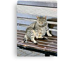 Irish Fat Cat, County Cork, Ireland Canvas Print